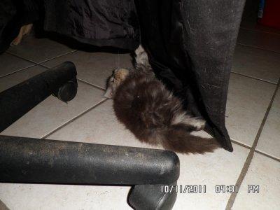 Galaxie le 10/11/11 qui joue avec mon mentaux :-)