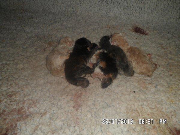 Les bébé de gloss son née le 24 juillet 2013