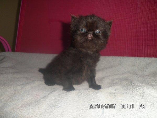 Bébé de galaxie née le 1 juillet 2013 (petit mâle )