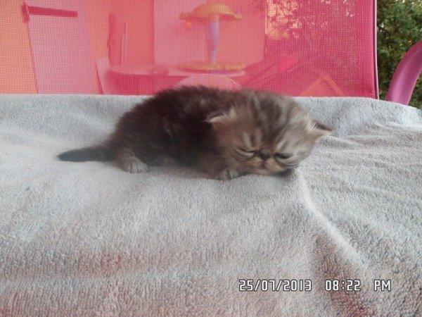 Bébé de galaxie née le 1 juillet 2013