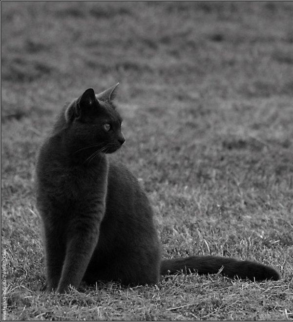 La Reine Du Destin Des Chats ( The queen of cats fate )
