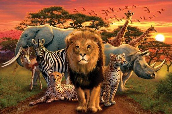 La Reine Des Tigres  ( The Queen of Tigers )