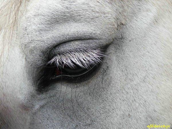 un oeil qui vous sublime!!!