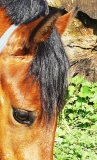 Photo de poney--CSO