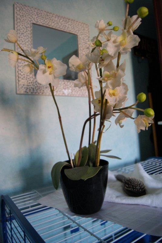 Plante artificielle orchidée blanche et son pot noir