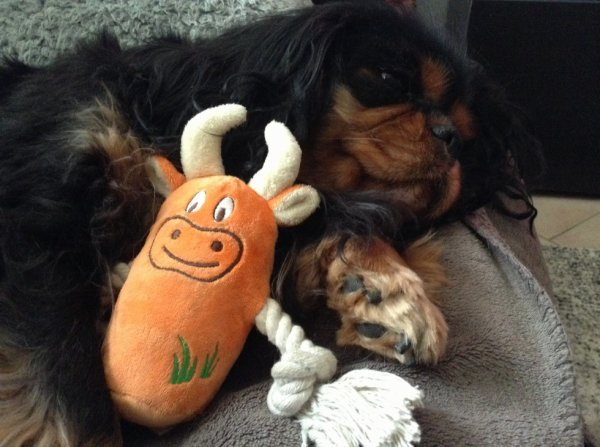 Deby et son jouet <3