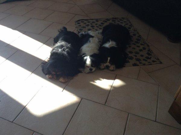 petite sieste au soleil .....