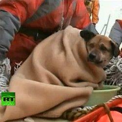 Japon : un chien sauvé 3 semaines après le tsunami