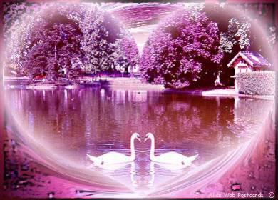 le lac des cygnes amoureuses