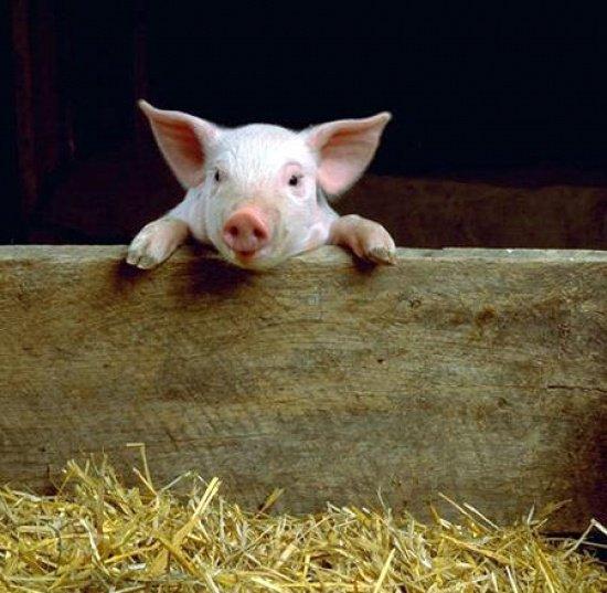 p'tit cochon tu regarde koi la ??? ... ferme les yeux
