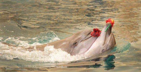 une rose pour vous mes amis
