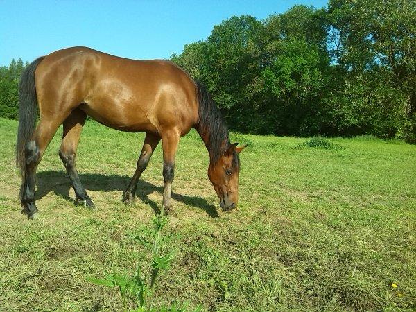 """"""" Un cheval ne peux appartenir à personne, c'est un esprit libre, on ne fait que l'emprunté"""""""