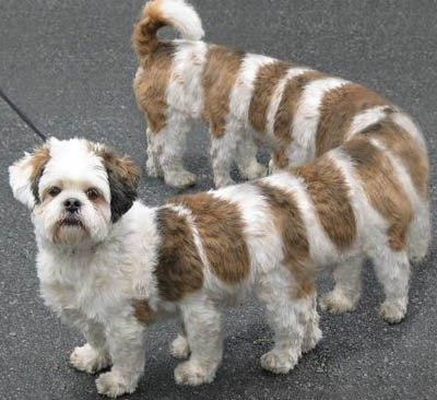chien nouvelle  génération
