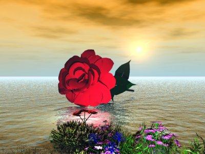 pour toi lily