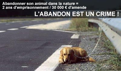 L ANIMAL N EST PAS UN JOUET IL FAIT PARTI DE LA FAMILLE