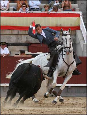 photo cheval taureau