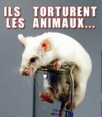 TELETHON = De l'argent pour torturer des animaux. Je dis NON ! : La vraie Recherche, celle qui utilise des méthodes éthiques et fiable :