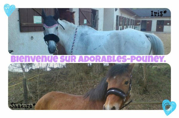 Welcome to Adorables-Pouney.