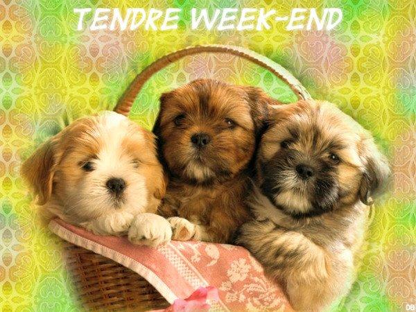 bon weekend a tous....