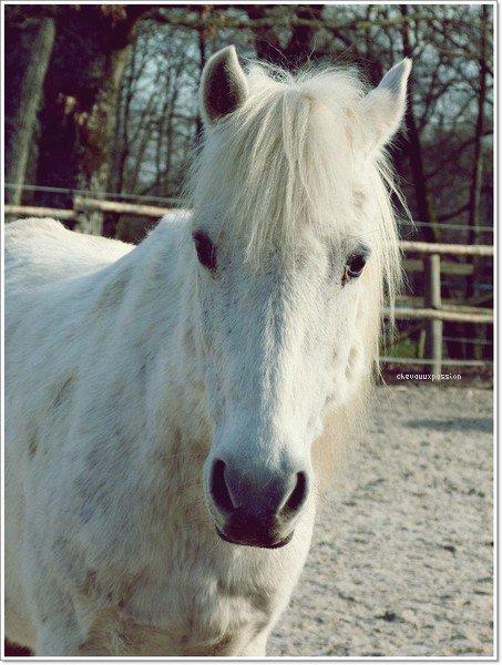 Présentation ; Les petits poneys