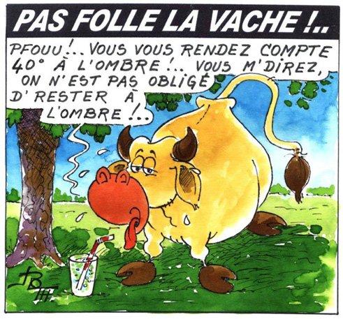 PAS FOLLE LA VACHE 620