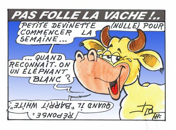 PAS FOLLE LA VACHE 622