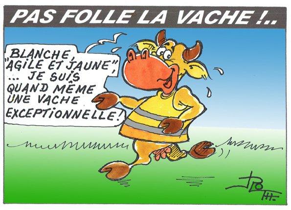 PAS FOLLE LA VACHE 636