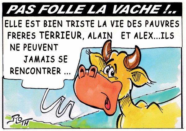 PAS FOLLE LA VACHE 645