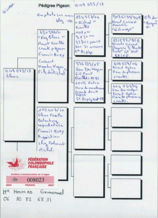 RÉSULTATS DE LA 1 ÈRE EXPOSITION SOCIÉTÉ TRÈS SATISFAIT 1ER ET 2EME EN CATÉGORIE JEUNE FEMELLE PUIS 5 ÈME  ET 12EME EN CATÉGORIE JEUNE MÂLE