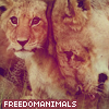 FreedomAnimals