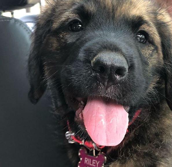 Vidéo du chien d'Amanda sur Instagram + Nouveaux tweets + Instagram Amanda !