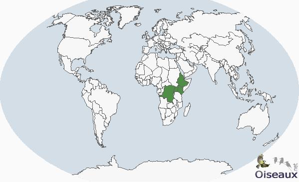 Abyssinie ( Ethiopie )