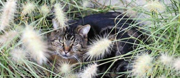 Pourquoi les chats entendent mieux que nous ?