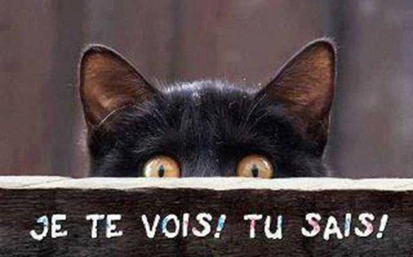 lesyeux du chat