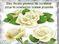 des rose blanches pour tous les sourires que je recois