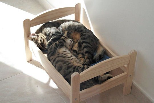 hmmmmm une bonne sieste a deux ou toute seule