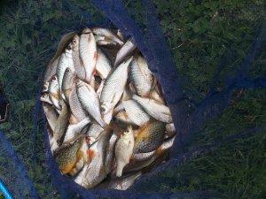 pêche technique en eaux peu profonde
