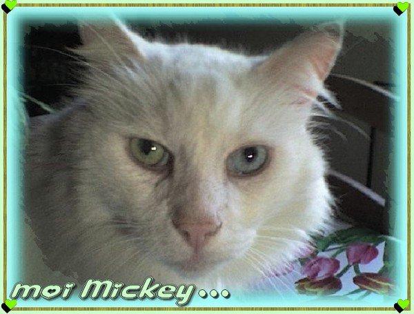 * :(  m0n Mickey n'est pLus Là depuis 4 ans déjà :((u)  FLiPER MiNNiE L''0NT REJ0iNT(u)