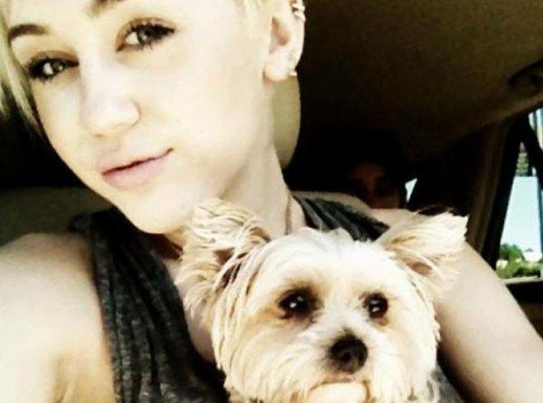 News 16 : Miley Cyrus pleure la mort de sa chienne