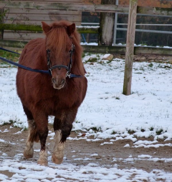 Pony in the snow !