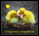 Photo de CrazyAnimals-x3