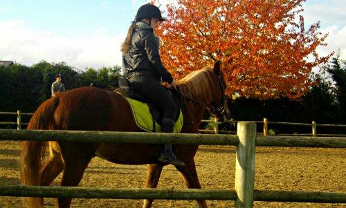 """"""" Le cheval c'est comme le red bull , sa donne des ailes """""""