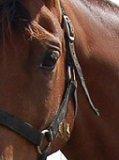 Photo de xxx-horse-and-me-xxx