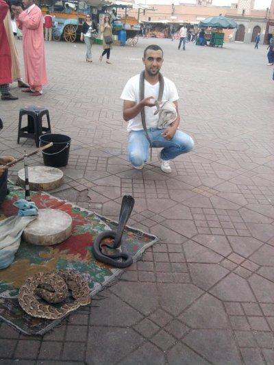Avec le serpent Dans la place jamaa lafna la plus belle place touristique dans le monde A marrakech bien venu a marrakech
