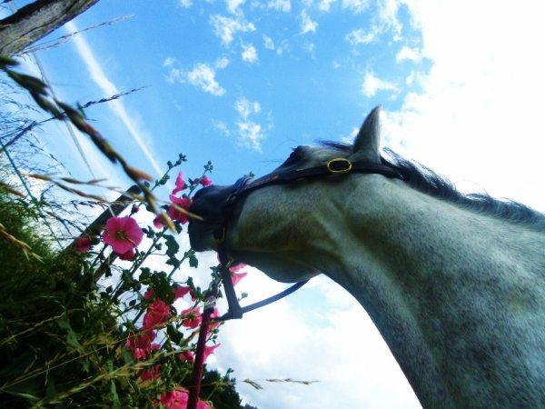 Moi mon cheval , je le vouvoie ...