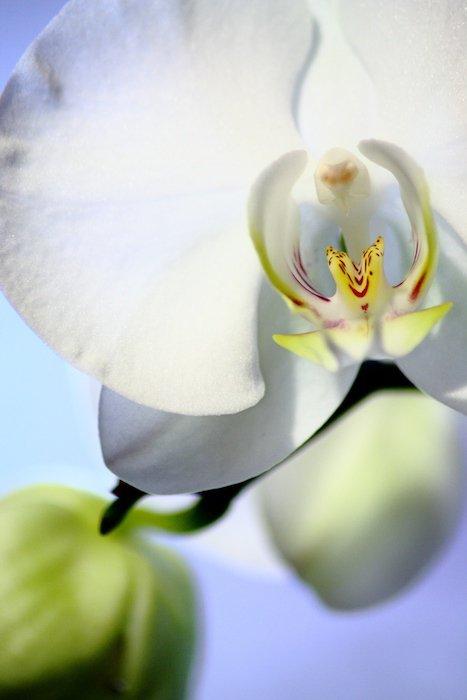 Hors-studio du 5 décembre 2010 : Orchidée