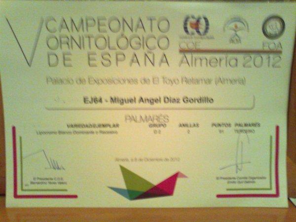 CAMPEONATO ESPAÑA  ( C.O.E )