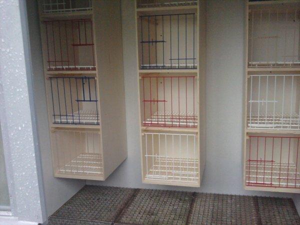 Le colombier des reproducteurs avec : sa nouvel couleur, casiers et pigeons...