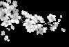 OS 18 : Une fleur de cerisier fanée bien trop vite