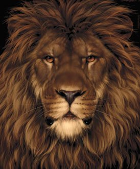 la souris cachée dans le lion + le cochon et la chouette